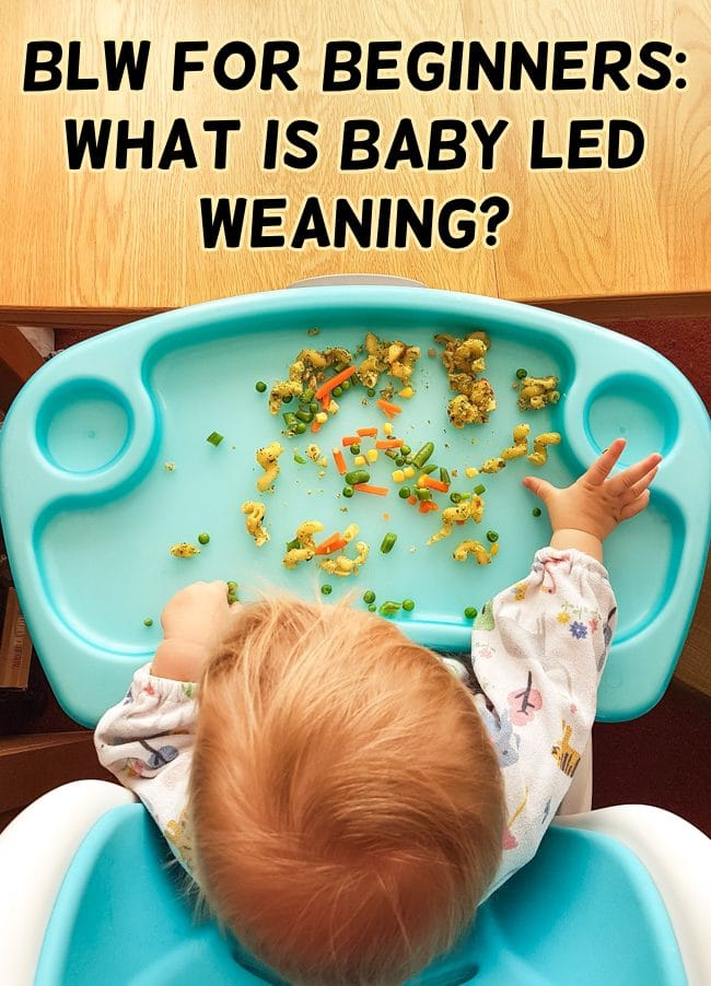 BLW for Beginners: What is Baby Led Weaning? – Easy Cheesy Vegetarian